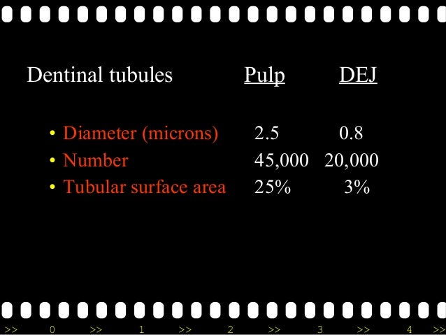 >> 0 >> 1 >> 2 >> 3 >> 4 >> Dentinal tubules Pulp DEJ • Diameter (microns) 2.5 0.8 • Number 45,000 20,000 • Tubular surfac...