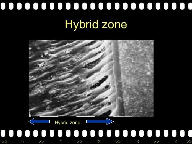 >> 0 >> 1 >> 2 >> 3 >> 4 >> Hybrid zone Hybrid zone