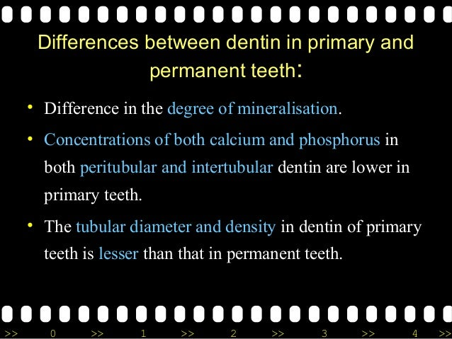 >> 0 >> 1 >> 2 >> 3 >> 4 >> Differences between dentin in primary and permanent teeth: • Difference in the degree of miner...