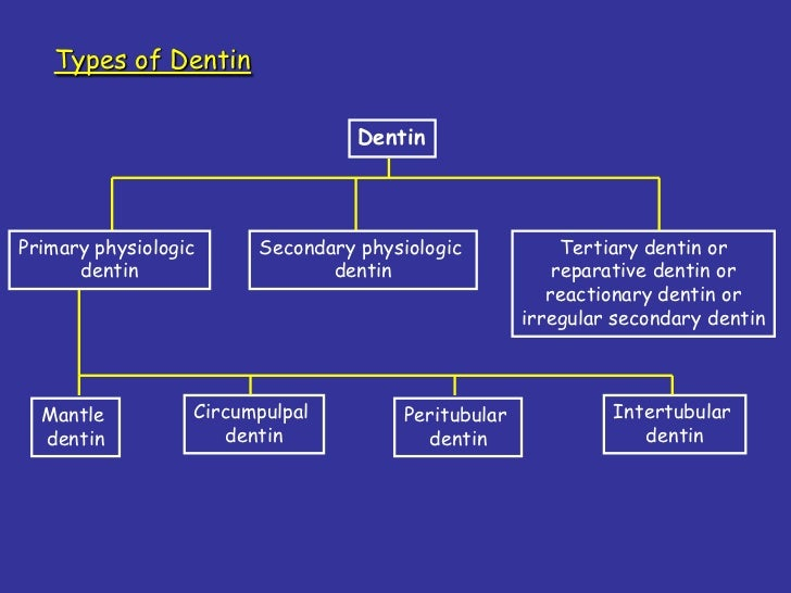 Image result for types of dentin