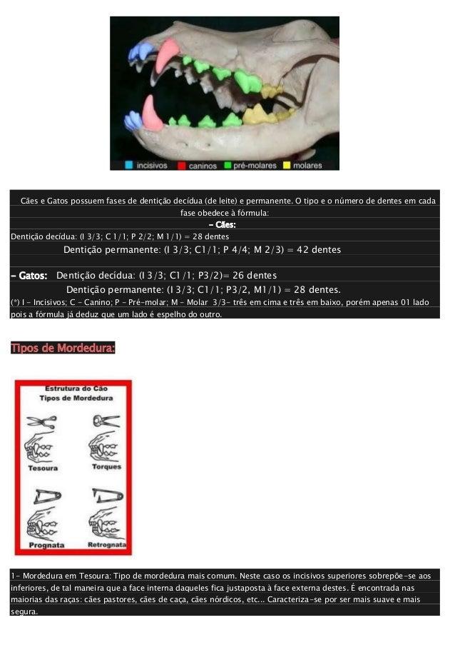 Dentição canina e felina Slide 2