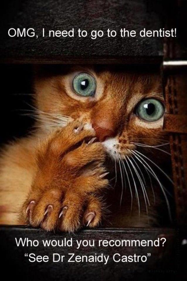 dentist in melbourne vogue smiles dr zenaidy castro funny caption cat…