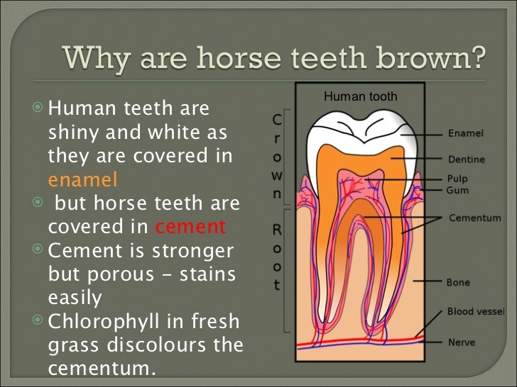 How To #3: How to tell if your horse needs his teeth done