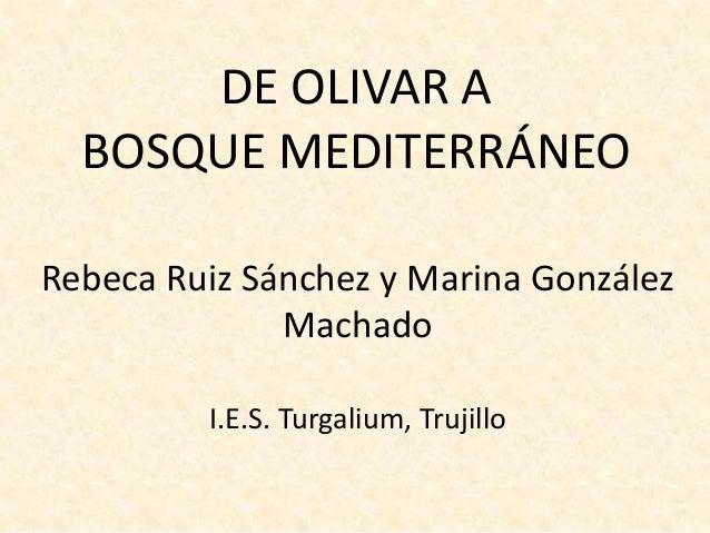 DE OLIVAR A BOSQUE MEDITERRÁNEO Rebeca Ruiz Sánchez y Marina González Machado I.E.S. Turgalium, Trujillo