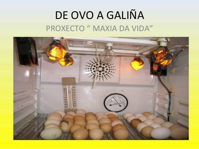 """DE OVO A GALIÑAPROXECTO """" MAXIA DA VIDA"""""""
