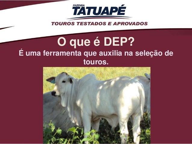 O que é DEP?É uma ferramenta que auxilia na seleção de                 touros.