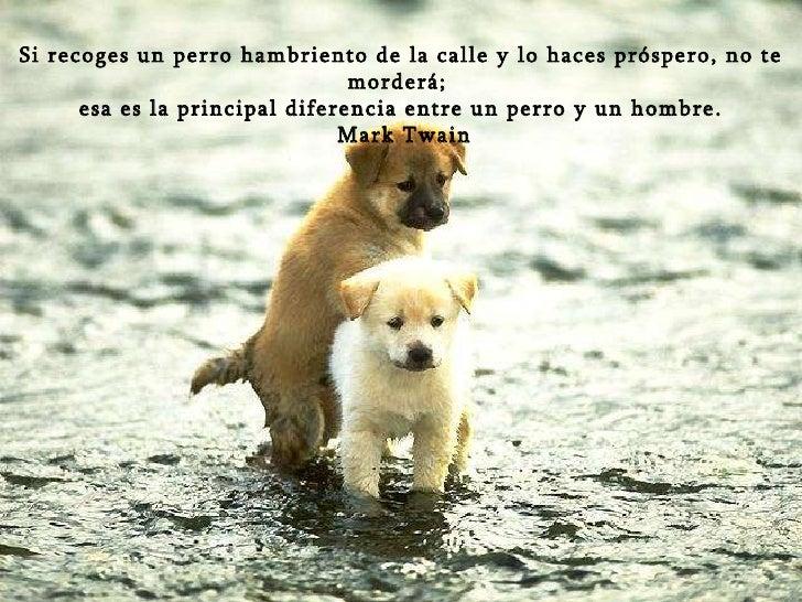 De Perros Y Personas