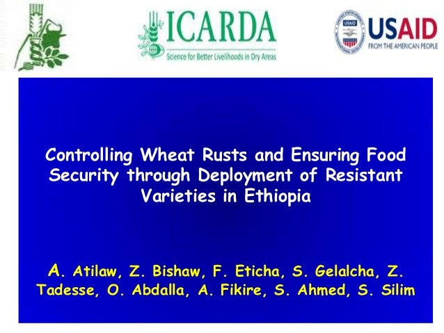 Controlling Wheat Rusts and Ensuring Food Security through Deployment of Resistant Varieties in Ethiopia A. Atilaw, Z. Bis...