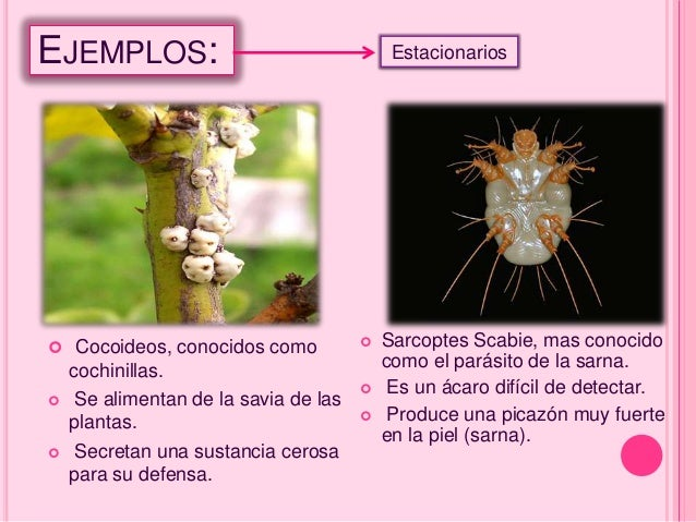 Depredaci n y parasitismo for Que son plantas ornamentales ejemplos