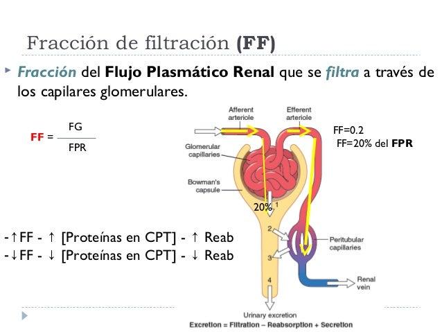 guyton renal tubular filtration