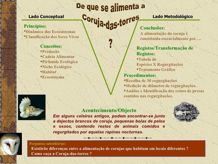 <ul><li>Princípios: </li></ul><ul><li>Dinâmica dos Ecossistemas </li></ul><ul><li>Classificação dos Seres Vivos </li></ul>...