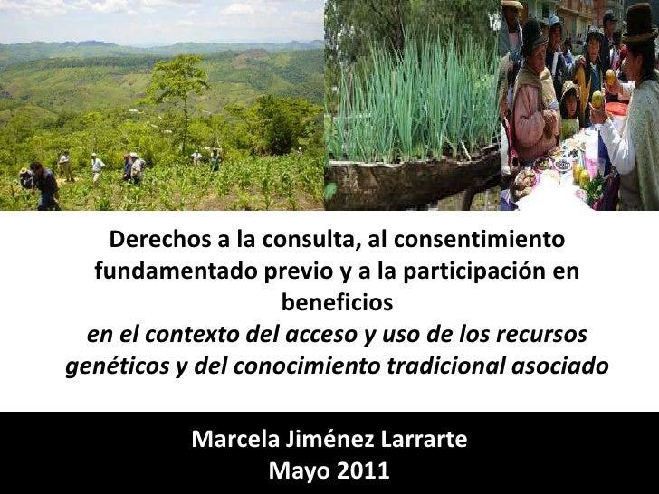 Derechos a la consulta, al consentimiento fundamentado previo y a la participación en beneficios en el contexto del acceso...