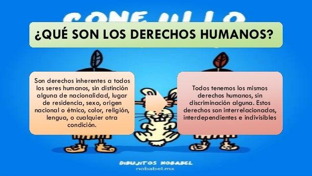 Q Son Los Orangutanes Derechos humanos
