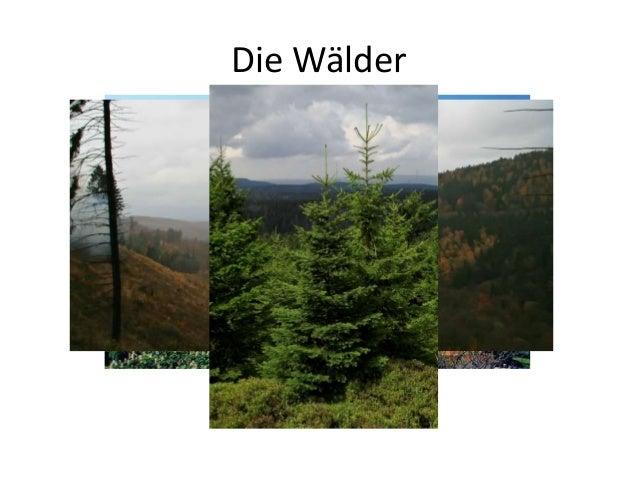 Die Wälder