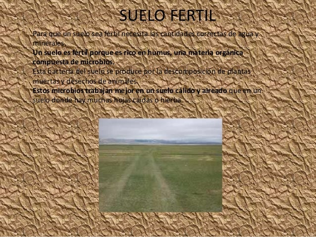 SUELO FERTIL  Para que un suelo sea fértil necesita las cantidades correctas de agua y  minerales.  Un suelo es fértil por...