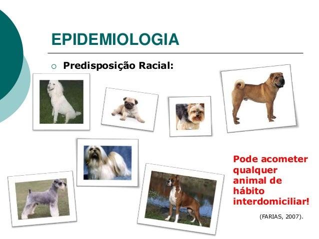 EPIDEMIOLOGIA  Predisposição Racial: (FARIAS, 2007). Pode acometer qualquer animal de hábito interdomiciliar!