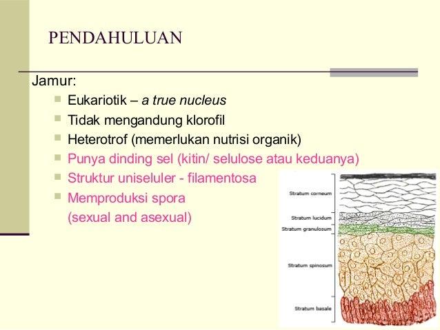 Dermatofitosis Slide 2
