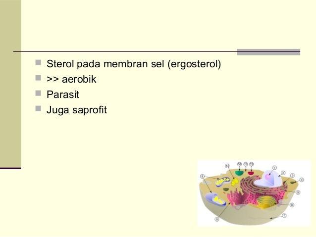 Dermatofitosis Slide 3