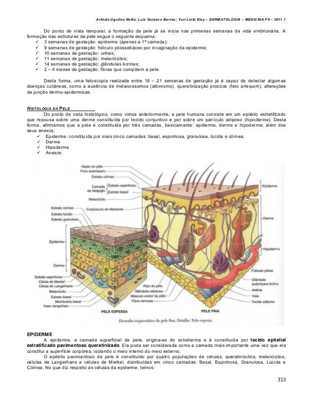Dermatologia completa