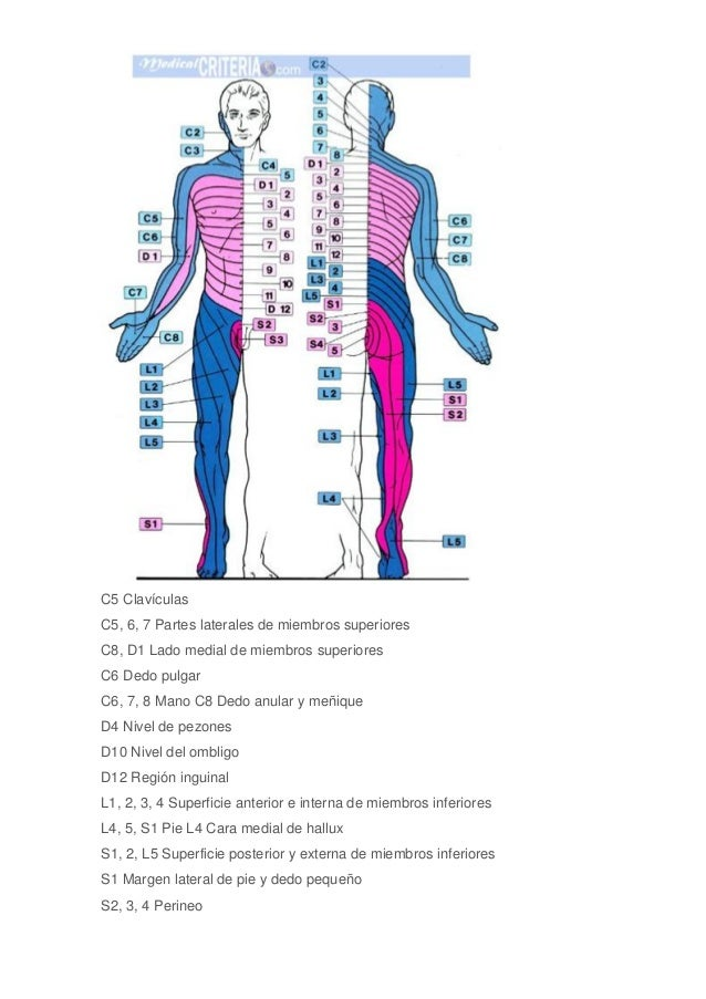 dermatoma-3-638.jpg?cb=1489641915
