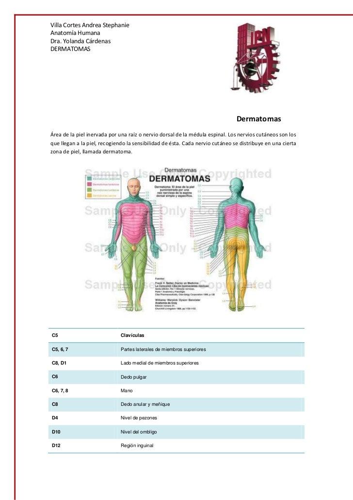 dermatomas-1-728.jpg?cb=1347939112