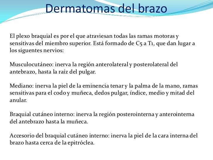 Dermatomas del brazoEl plexo braquial es por el que atraviesan todas las ramas motoras ysensitivas del miembro superior. E...