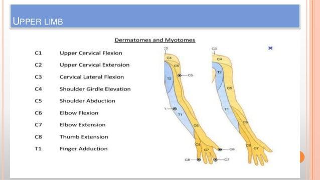 Dermatomes & Myotomes (amir) Upper Extremity Myotomes