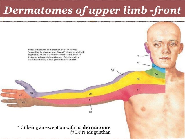 Dermatomes of upper limb- Dr.N.Mugunthan.MS on