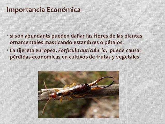 Derm ptera for Importancia de las plantas ornamentales