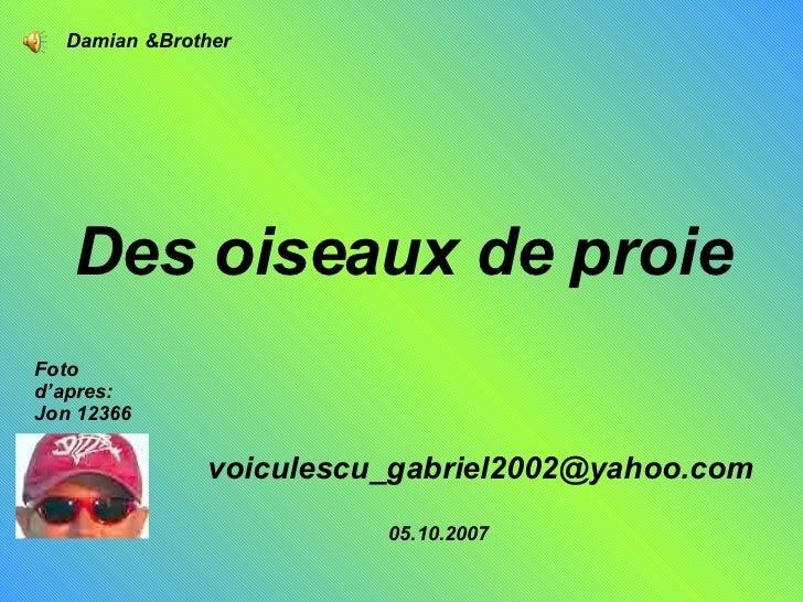 Des oiseaux de proie   [email_address] Foto d'apres: Jon 12366 05.10.2007 Damian &Brother
