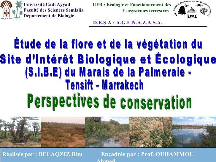 Université Cadi Ayyad           UFR : Ecologie et Fonctionnement des       Faculté des Sciences Semlalia                Ec...