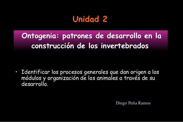 Ontogenia: patrones de desarrollo en la construcción de los invertebrados  <ul><li>Identificar los procesos generales que ...