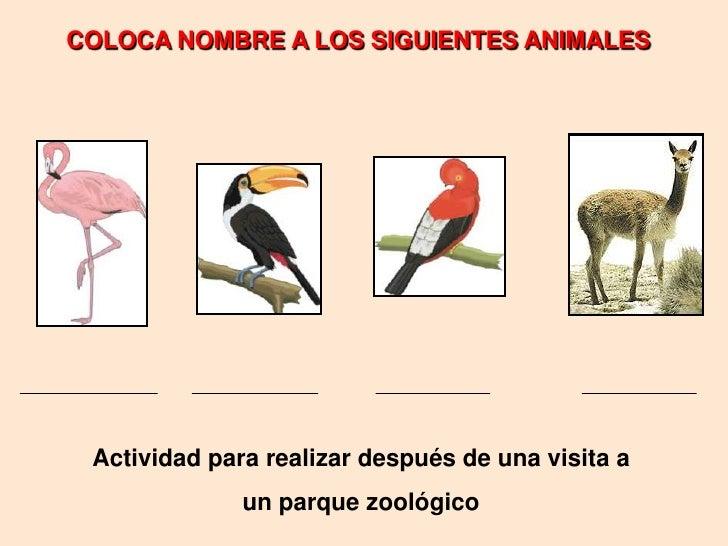 COLOCA NOMBRE A LOS SIGUIENTES ANIMALES<br />Actividad para realizar después de una visita a <br />un parque zoológico<br />