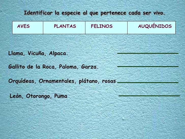 Identificar la especie al que pertenece cada ser vivo.<br />AVES PLANTAS FELINOS      AUQUÉNIDOS<br />Llama, Vicuña, A...