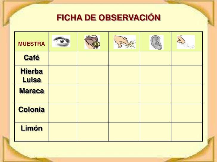 FICHA DE OBSERVACIÓN<br />