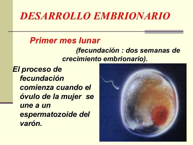 b6b9efb5f Desarrollo embrionario y fetal