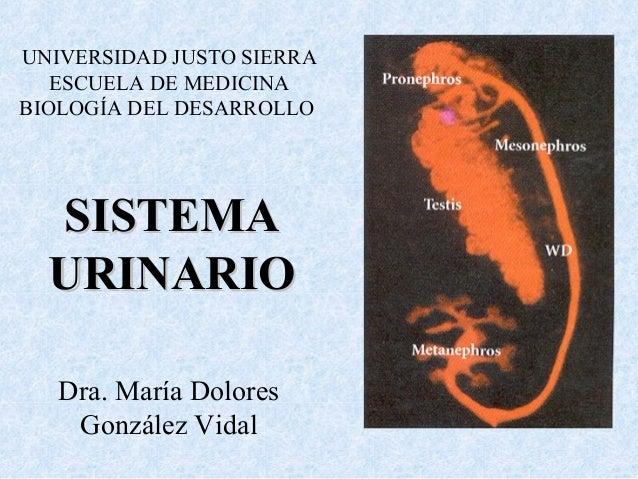 UNIVERSIDAD JUSTO SIERRA  ESCUELA DE MEDICINA  BIOLOGÍA DEL DESARROLLO  SSIISSTTEEMMAA  UURRIINNAARRIIOO  Dra. María Dolor...