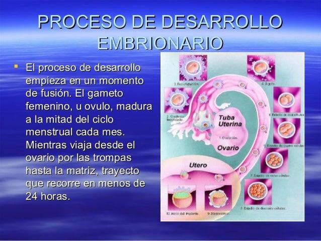 PROCESO DE DESARROLLO         EMBRIONARIO El proceso de desarrollo  empieza en un momento  de fusión. El gameto  femenino...