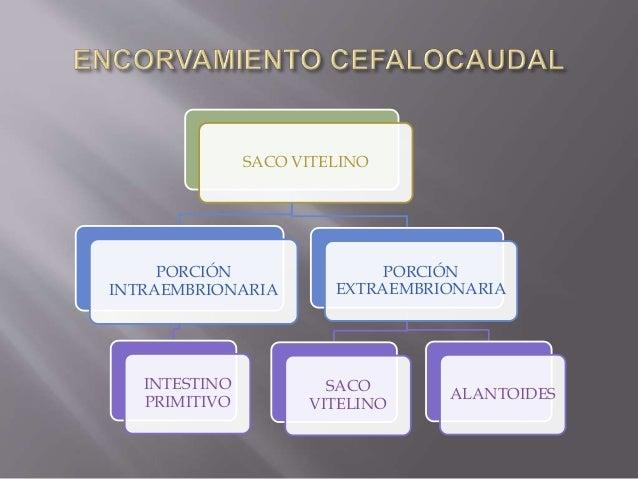 5 PARES(4ta-5ta Semana) EVAGINACIONES ENDODERMICAS DE LAS PAREDES LATERALES DE LA FARINGE QUE POCO A POCO SE INTRODUCEN EN...