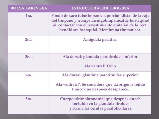 Desarrollo embrionario de la cara y de la