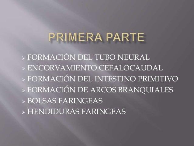  FORMACIÓN DEL TUBO NEURAL  ENCORVAMIENTO CEFALOCAUDAL  FORMACIÓN DEL INTESTINO PRIMITIVO  FORMACIÓN DE ARCOS BRANQUIA...