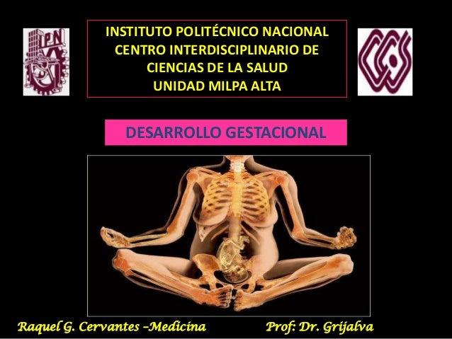 INSTITUTO POLITÉCNICO NACIONAL CENTRO INTERDISCIPLINARIO DE CIENCIAS DE LA SALUD UNIDAD MILPA ALTA  DESARROLLO GESTACIONAL...