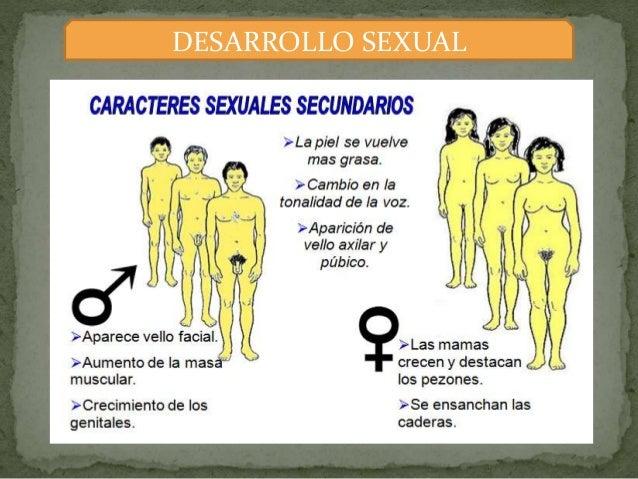Que es desarrollo psicosexual del adolecente
