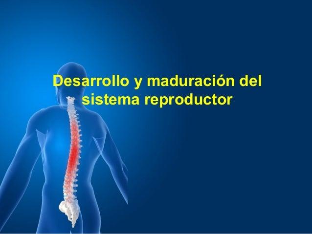 Desarrollo y maduración del sistema reproductor