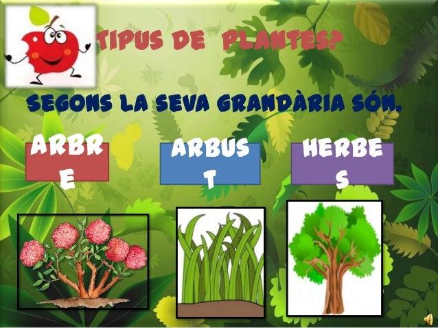 Descobrim les plantes for Les plantes