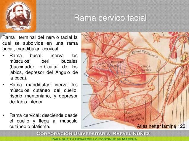 tecnica quirurgica Descompresion del nervio facial point