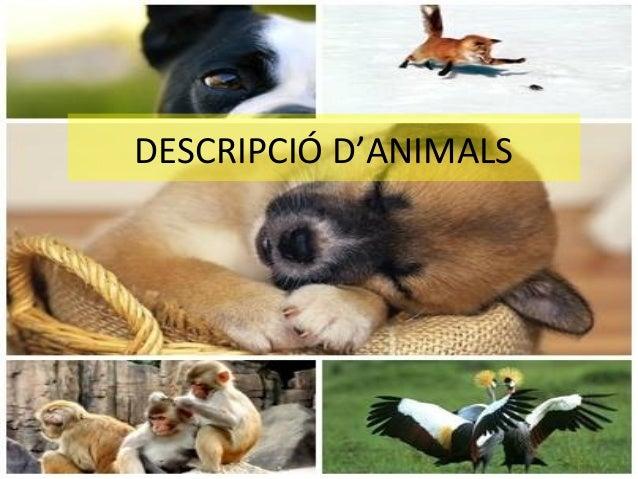 DESCRIPCIÓ D'ANIMALS