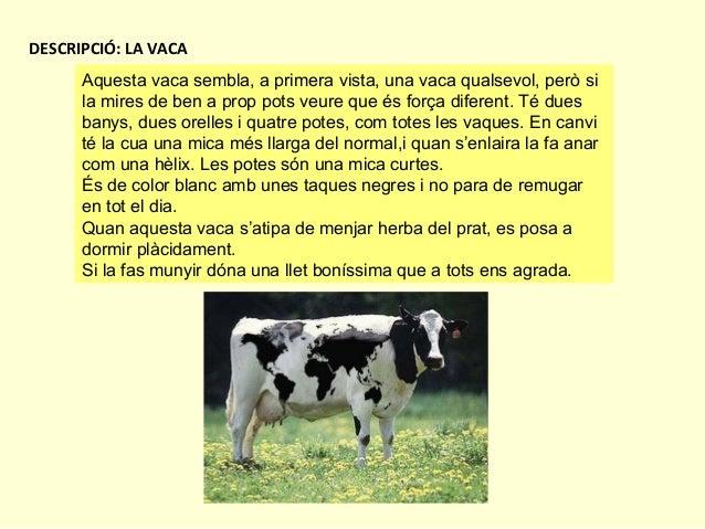 DESCRIPCIÓ: LA VACA Aquesta vaca sembla, a primera vista, una vaca qualsevol, però si la mires de ben a prop pots veure qu...