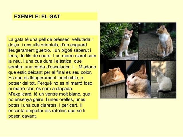 EXEMPLE: EL GAT  La gata té una pell de prèssec, vellutada i dolça, i uns ulls orientals, d'un esguard lleugerament guerxo...