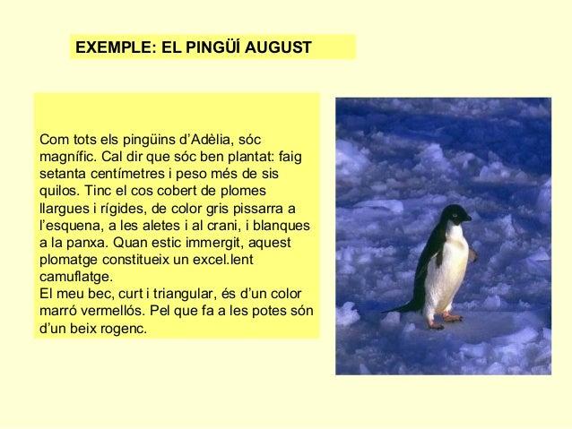 EXEMPLE: EL PINGÜÍ AUGUST  Com tots els pingüins d'Adèlia, sóc magnífic. Cal dir que sóc ben plantat: faig setanta centíme...